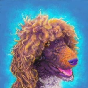 Parti Poodle - custom Portrait